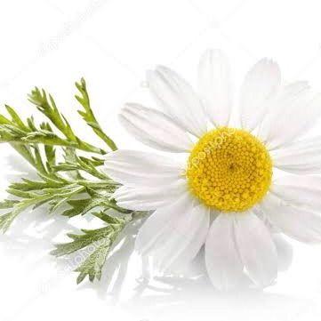 florcamomila