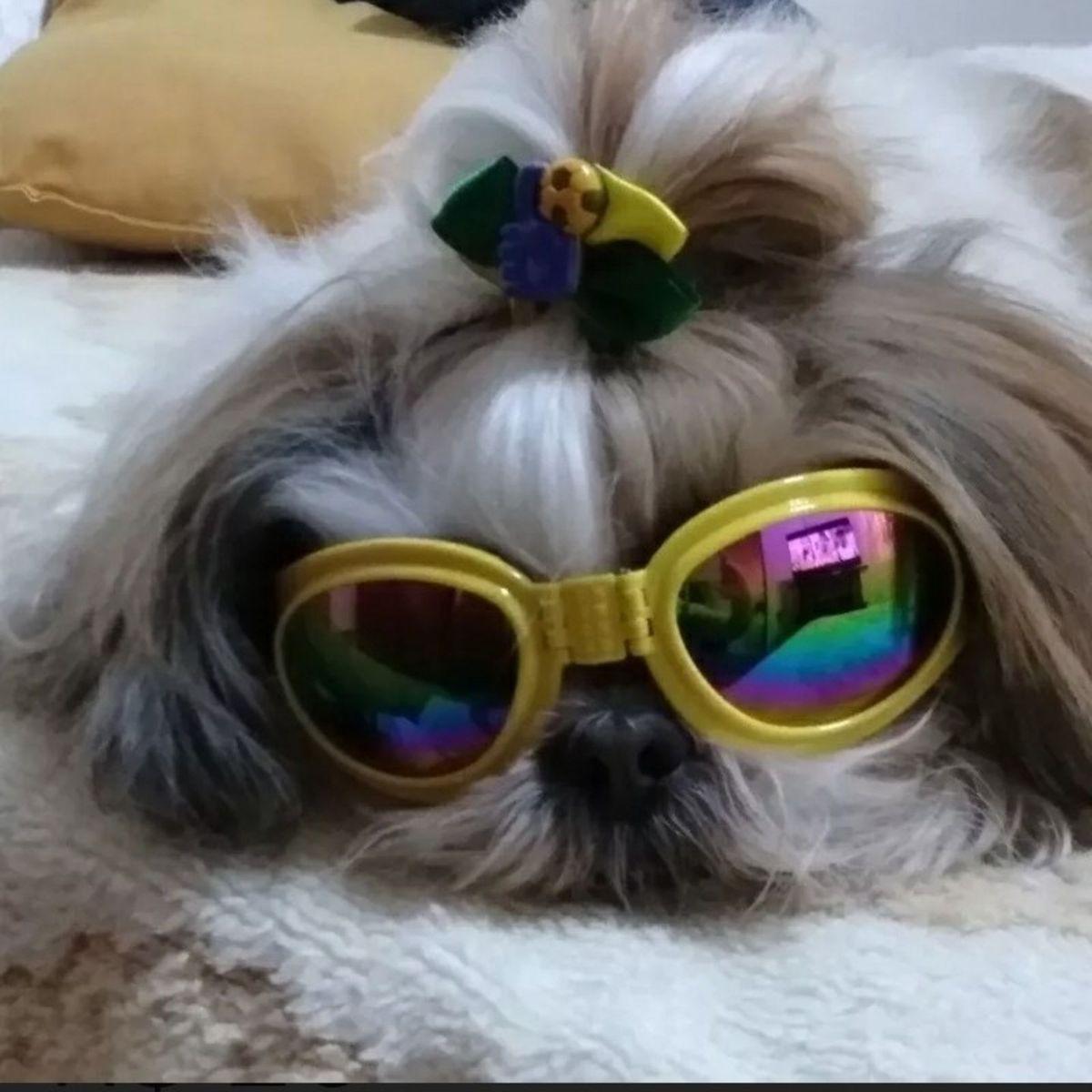 1b1eb8903ca46 Óculos de Sol para Cachorro