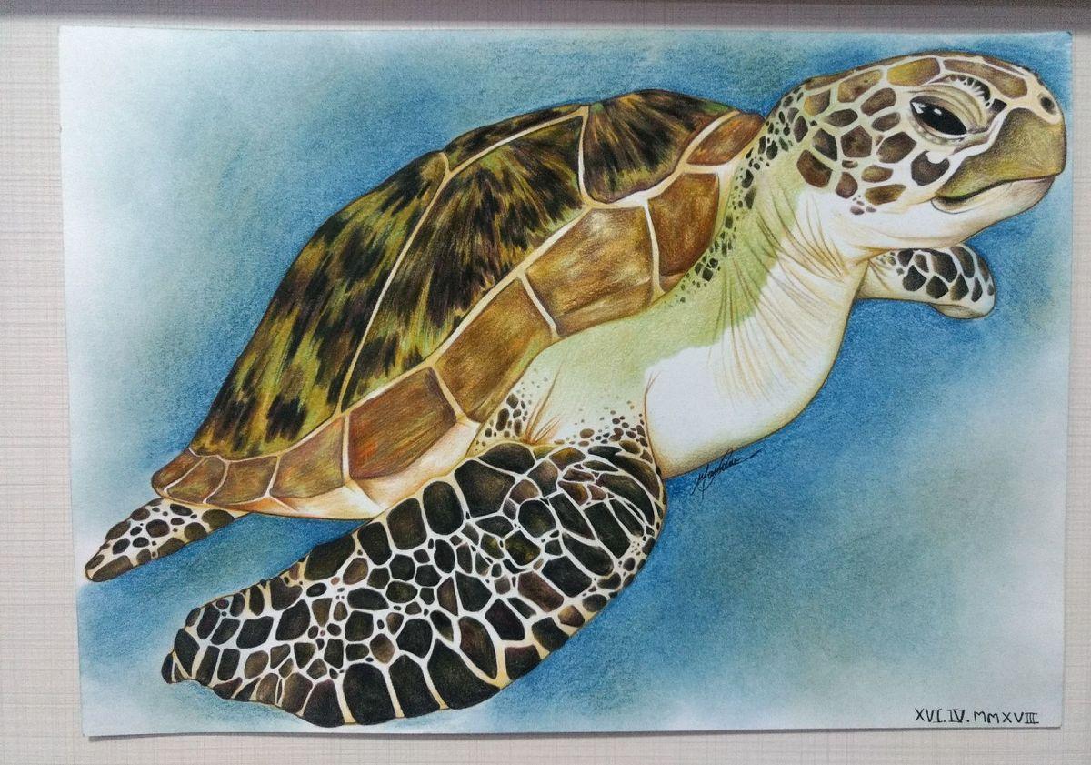 Desenho A Lapis Realista De Tartaruga Marinha Item De Papelaria